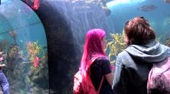 Visitors at the Coral Reef Naturalistic Display of Bermuda Aquarium & Zoo. - stock footage