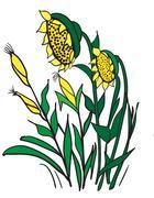 Corn and sunflowers - stock illustration