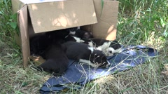 Stray puppies in cardboard box on grass, outdoors, sleeping Stock Footage