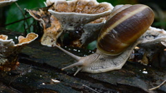 Snail on wooden. Stock Footage