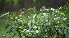 Rain forest. Rain garden. Tropical rain. Rain leaves background. Rainy wet we Stock Footage
