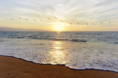 Ocean Sunset Birds - stock photo