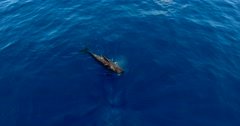 Pilot whale rotation camera aerial shot. Stock Footage