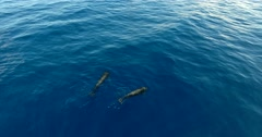 Pilot whales family in blue water aerial shot. - stock footage