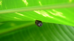 Snail on leaves. Stock Footage
