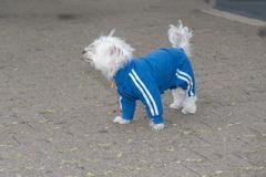 Matching jacket and workout pants. - stock photo
