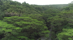 AERIAL: Lush acacia trees growing on jungle riverbanks deep in vast rainforest Stock Footage