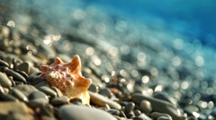 Seashell on the pebble beach and waves - stock footage