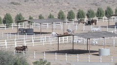Horses in corral on farm landscape. Top view of stud Stock Footage