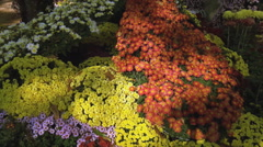 Beautiful floral compositions Flower Festival (3) Stock Footage