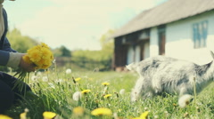 Summer sunny day in the lush garden blond girl playing with young goat. RAW Stock Footage