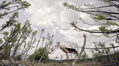 Stork protects its nest of a bird flying near. Close up Stock Footage