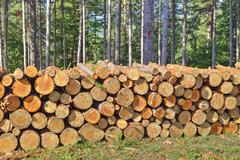 Fresh cut timber in the forest - stock photo
