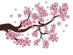 Blooming Sakura Branch - stock illustration