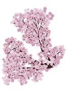 Blooming Sakura Branch Stock Illustration