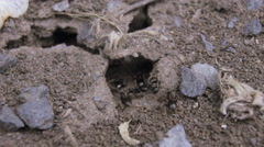 Small ant hill with a lot of insects Stock Footage