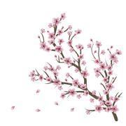 Cherry Blossom Branch - stock illustration