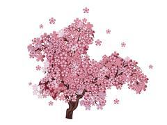 Cherry Blossom Tree - stock illustration