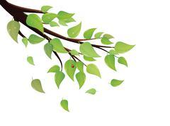 Green Leaves Tree Branch Stock Illustration