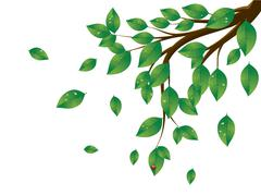 Green Leaves Tree Branch - stock illustration
