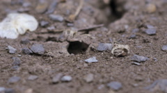 small ant hill with a lot of insects - stock footage