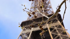 Eiffel tower with branch of chestnut tree. Blue sky background. - stock footage
