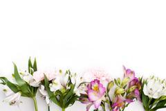 Pink gillyflowers with alstroemeria on white background - stock photo