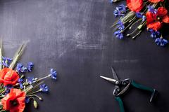 Red poppies with blue cornflowers and rye on old blackboard Stock Photos