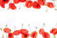 Heads of red poppies on white background flat lay - stock photo