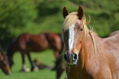 Wonderful close-up photo of light brown horse - stock photo