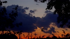 Reed against the sunset Stock Footage
