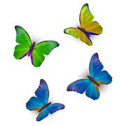 Butterfly Set Isolated on White Realistic Vector Illustration - stock illustration