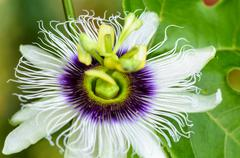 Exotic beautiful flower - stock photo