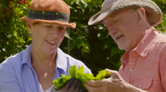 Senior aged couple admiring lettuce from their garden Stock Footage