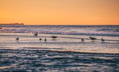 Atlantic Ocean coastline - stock photo