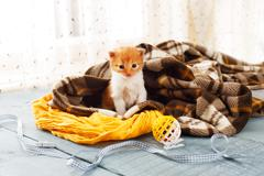 Red orange newborn kitten in a plaid blanket - stock photo