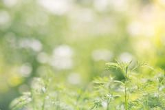 Green field bokeh background, lens blur - stock photo