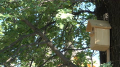 Great starling feeding chicks in the birdhouse Stock Footage