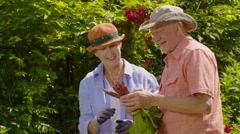 Senior aged couple looking at radishes from their garden, wide shot Stock Footage