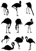 Flamingo - stock illustration