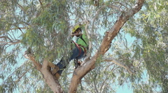 Arborist safety helmet safety rope adjust in tree during tree removal - stock footage
