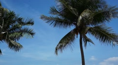 Silhouette of coconut palm tree in front of clear blue bright sky Stock Footage