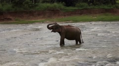 A day in the life of Sri Lanka - elephant raising it's trunk Stock Footage