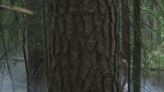Girl In A Mysterious Foggy Forest - stock footage