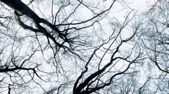 Gliding Under Bare Trees Stock Footage