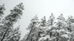 Car on the road snow storm, fir trees covered with snow Stock Footage