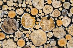 Pile of  different wood logs Stock Photos