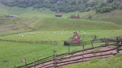 Time-lapse video with a flock of sheep on a meadow in a mountain rural landscape Stock Footage