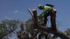 HD tree climber cuts off fat branch and lets it fall 2 close up Stock Footage
