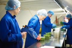 Workers on production line wearing hair nets packaging vegetables Stock Photos